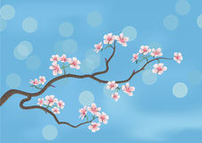 Flowered sakura Stock Photo