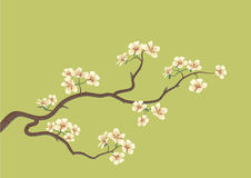 Flowered sakura Stock Image