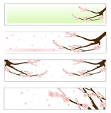 Flowered sakura Royalty Free Stock Photography