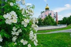 Flowered shrub stock photo