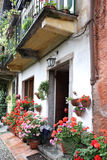 Flowered street. Beautiful Flowered street, pescallo, italy Stock Images