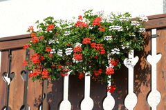 Flowered terrace with large pots of Geraniums blooming 7 Royalty Free Stock Image