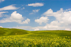 Flowered Tuscan Landscape Stock Photography
