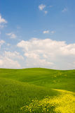 Flowered Tuscan Landscape Royalty Free Stock Photography