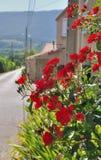 Flowered village Royalty Free Stock Photos