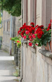 Flowered window sill Stock Photos