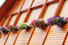 Flowered windows Stock Images