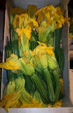 Flowered zucchini in the wooden box Stock Photos