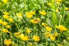 Flowerers florecientes en primavera Foto de archivo