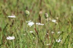 Floweres salvajes en el campo Foto de archivo libre de regalías