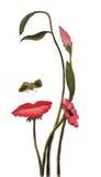 Flowerface Στοκ εικόνες με δικαίωμα ελεύθερης χρήσης