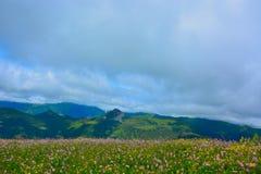 Flowerfield in de hooglanden Royalty-vrije Stock Fotografie