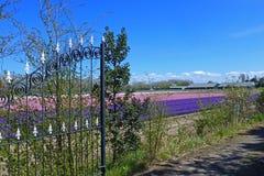 Flowerfield Royalty Free Stock Image