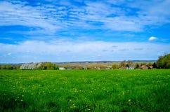 Flowerfield Stock Photography