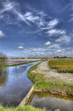Flowerfield in Holland. Flower fields in rural Holland Royalty Free Stock Images
