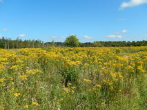 Flowerfield Royalty Free Stock Photography