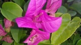 Flowerful photos libres de droits