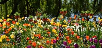 Flowergarden на весне, красочных parkflowers красоты, тюльпанах, маке Стоковые Фото