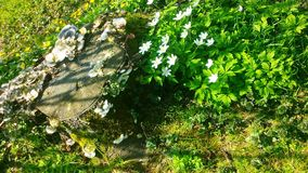Flowergarden 免版税库存照片