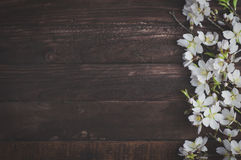 Flowering almond branches on a brown wooden surface. Empty space on the left, vintage toning Royalty Free Stock Image