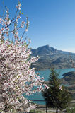 Flowering almond of Zahara. Lake located in the town of Zahara de la Sierra in the Spanish province of Cadiz, is the coast and mountain scenery in the background Stock Images