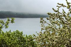Apple trees, tree, spring, flower, flowers, tree, fog, lake, Shore Stock Photography