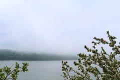 Apple trees, tree, spring, flower, flowers, tree, fog, lake, Shore Stock Images