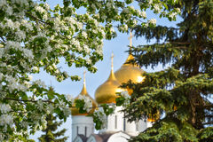 Flowering apple tree branch against the background of the Orthodox cathedral Royalty Free Stock Image