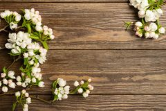 Flowering apple tree branch on wooden background. Spring concept. Flat layout. View from above. Copy space. royalty free stock photo