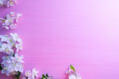 Flowering apple tree branches on a pink wooden background