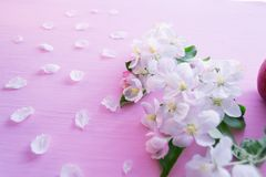 Flowering apple tree branches on a pink wooden background.  royalty free stock photo