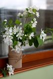 Flowering apple tree in a vase on the window. Blooming apple tree in a vase on the window. wood window sill stock photos