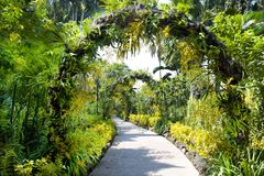 Botanical Garden, path with blooming gates in Singapore Stock Image