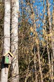 Flowering aspen trees and bird house Stock Photography