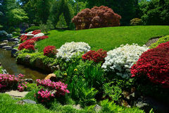 Flowering Azaleas bordering a pond. Beautiful red and white flowering azalea bushes and plants surrounding a koi pond inside a japanese garden Royalty Free Stock Photo
