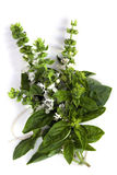 Flowering Basil Stock Images