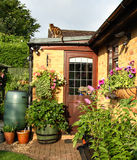 Flowering Baskets and Planters. Flowering Hanging Baskets and Planters in an English Back Garden with a Cat sitting on the roof Stock Images
