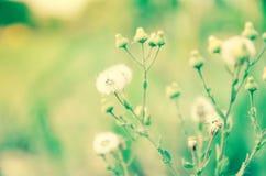 Flowering beatiful Royalty Free Stock Image