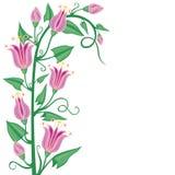 Flowering bindweed Stock Images