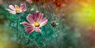 Flowering, blooming purple flower in meadow royalty free stock photos