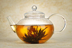 Flowering blooming tea Royalty Free Stock Images