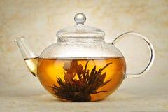 Flowering blooming tea Royalty Free Stock Images