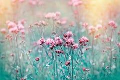 Flowering, blooming thistle - burdock in meadow stock image