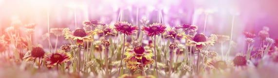 Flowering, blooming yellow flowers in flower garden royalty free stock image