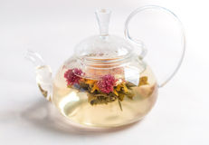 Flowering or blossoming tea in glass teapot stock photo
