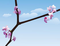 Flowering branch Stock Images