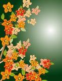 Flowering branch Stock Photos