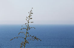 Flowering branch against the sea, sunny day Stock Photography