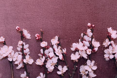 Flowering branch of apricot on fabric stock photo