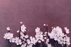 Flowering branch of apricot on fabric Royalty Free Stock Photos